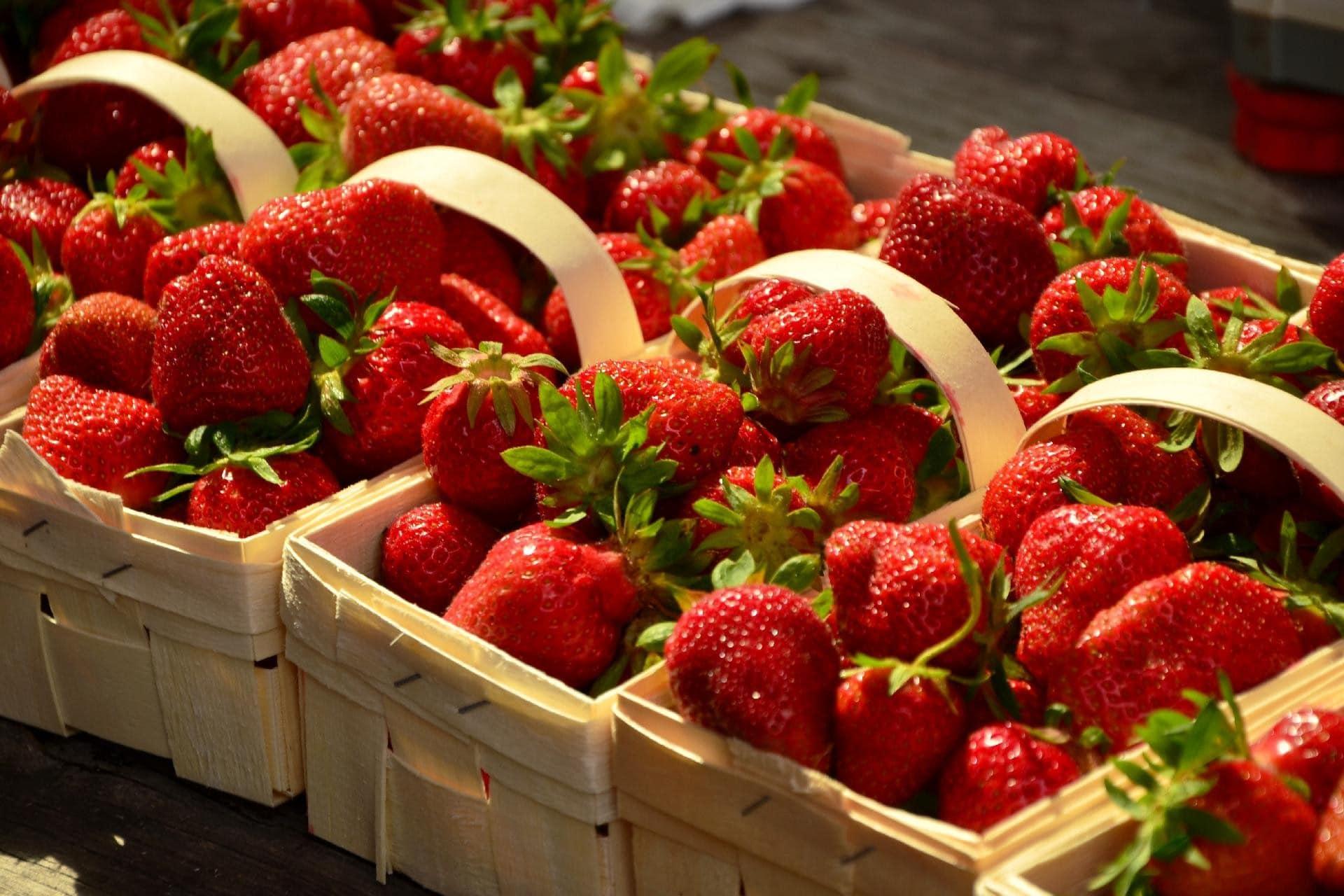 Kunratické jahody - samosběr cena a kde koupit